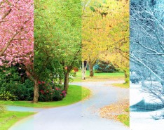 through the seasons