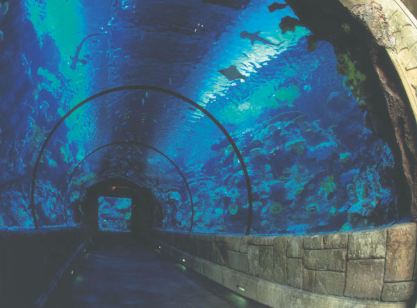 Mandalay Bay's Shark Reef Aquarium. Courtesy of MGM Resorts International.